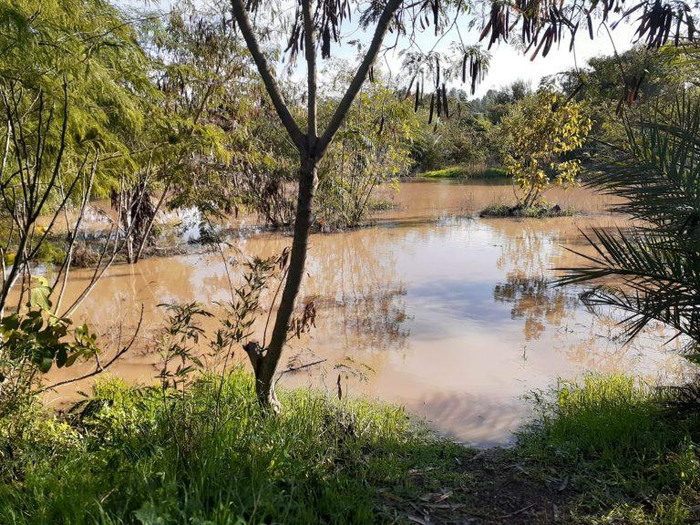הלימן ביער המאכל בקדרון מלא במים