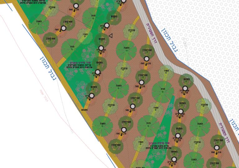 חתך מתכנית צמחיה של יער מאכל