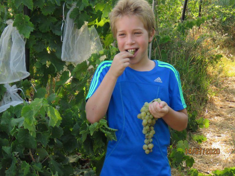 ילד ביער מאכל אוכל ענבים