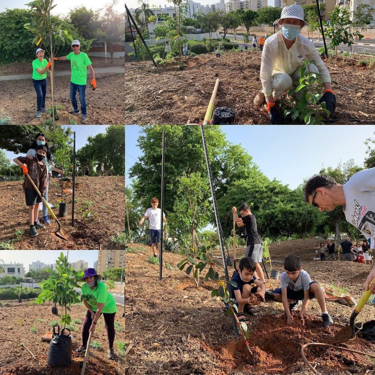 קולאז׳ תמונות של אנשים מקימים יער מאכל קהילתי