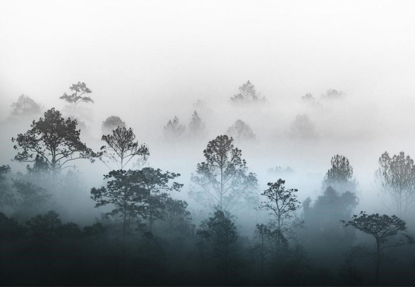 יער וגשם